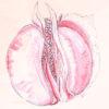 co2 lazer v lechenii vulvovaginalnoj atrofii